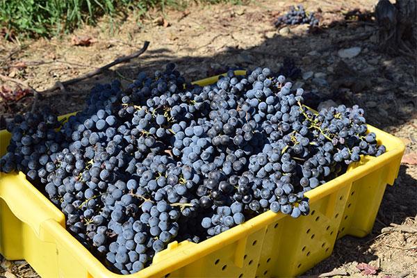 Glorie Farm Winery
